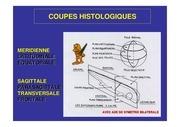 Fichier PDF embryo descriptive 1