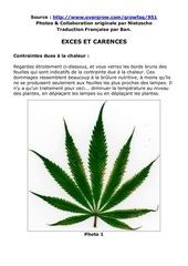 12 culture du cannabis problemes carence exces