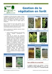 gestion de la vegetation en foret