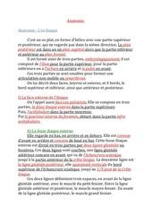 anatomie l os iliaque pdf
