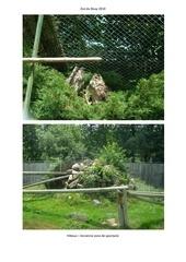 zoo du bouy 2010