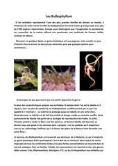 les bulbophyllum