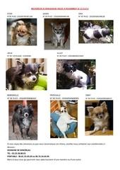 Fichier PDF recherche 8 chihuahuas voles a folembray le 11