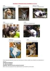 Fichier PDF recherche 7 chihuahuas voles a folembray le 11 11 11 belgique