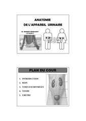 anatomie appareil urinaire dr abdelkafi 1