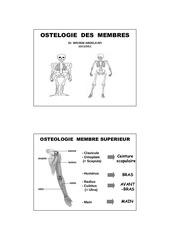 anatomie membre dr abdelakfi