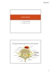 les plexus lombal et sacral 1