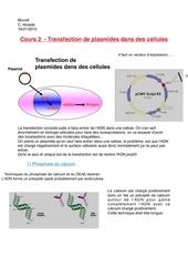 cours 2 transfection de plasmides