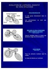 evolution de l appareil digestif du veaux