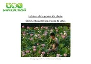 comment semer planter les graines de lotus