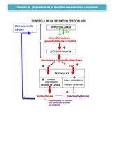 Fichier PDF chapitre 5 regulation testo correction