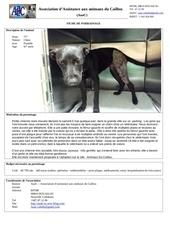 Fichier PDF parrainage chienne noire