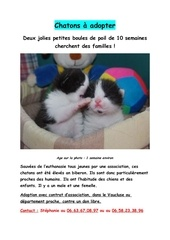 affiche chatons1