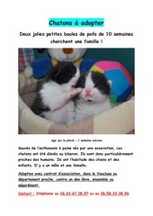 affiche chatons2
