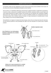 Fichier PDF corbeille branchiale