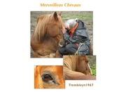 essai livre merveilleux chevaux 22 juillet 2012 1