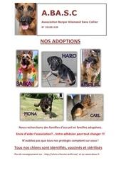 nos adoptions2