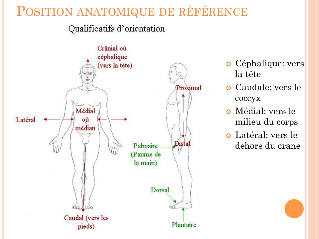 Aperçu du document 3 introduction a la terminologie osteopathique .pdf - page 2/6