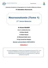 neuroanatomie1