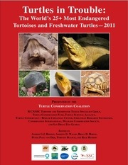 top 25 turtles in trouble 2011