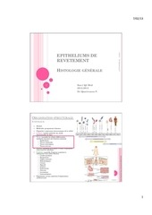 histologie dias 2 epitheliums de revetement
