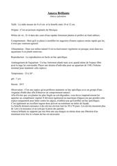 Fichier PDF ameca brillante