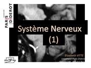 anatomie systeme nerveux partie 1 blanc