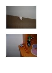 petites souris blanche et grise pdf