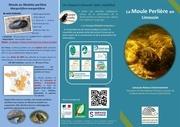 plaquette moule perliere