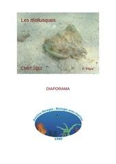diaporama mollusques pp
