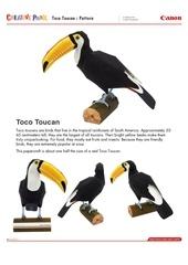 toco toucan e a4