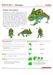 veiled chameleon e a4