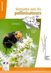 diversite pollinisations