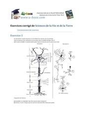 exercices de svt le fonctionnement des neurones