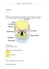 Fichier PDF anatomie synthese janvier 2014