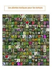 les plantes toxiques pour les tortues