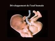 embryo humaine