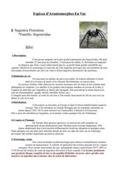especes araneomorphe en vue