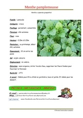 Fichier PDF mentha x piperata grappefruit