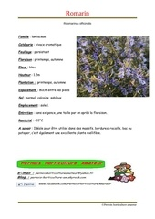 Fichier PDF rosmarinus officinalis