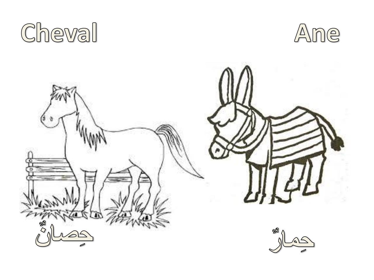 Diapositive 1 Par ابو القاسم Coloriage Les Animaux Arabe
