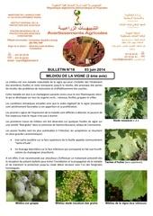18 14 mildiou de la vigne 2eme avis