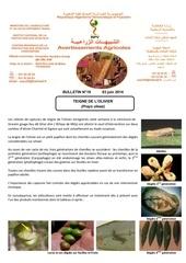 19 14 teigne de l olivier