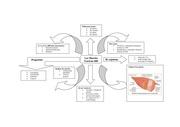 bio heuristique muscles