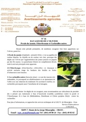 ravageurs de l olivier