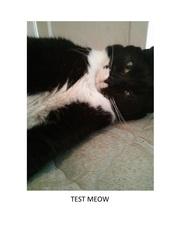 test meow