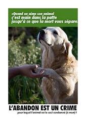 l abandon d animaux est un crime