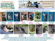 affiche chatons complete juillet 2014