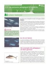 poissons pelagique et la peche