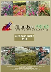 catalogue tillandsia prod public